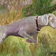 Weimaraner Point Art Print