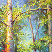 Welcome Home - Birch And Aspen Trees Art Print