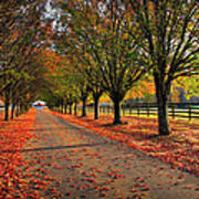 Welcome Home Bradford Pear Lined Drive-way Art Print