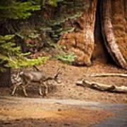 Welcome Home - Sequoia National Forest Art Print