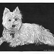 West Highland White Terrier Art Print