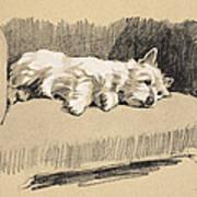 West Highlander, 1930 Art Print