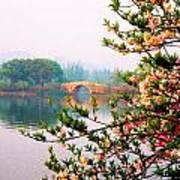 West Lake Blossums Art Print