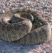 Western Dakota Prairie Rattlesnake Art Print