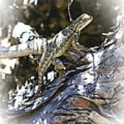 Western Fence Lizard Aka Blue-belly Lizard Art Print