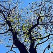 Western Michigan Trees 1 Art Print