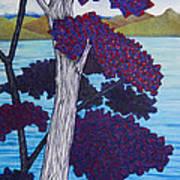 Western Skink On Tree Next To Lake Art Print