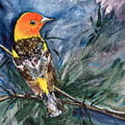 Western Tanager At Mt. Falcon Park Art Print