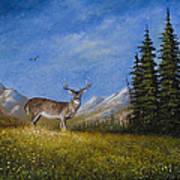 Western Whitetail Art Print