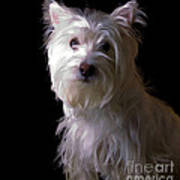 Westie Drama Art Print by Edward Fielding