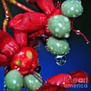 Wet Berries Art Print by Kaye Menner