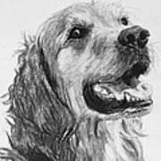 Wet Smiling Golden Retriever Shane Art Print