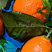 Wet Tangerines Art Print by Alexander Senin