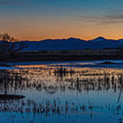 Wetland Twilight Art Print