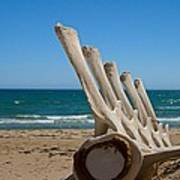 Whale Bones On The Beach Art Print by Robert Bascelli