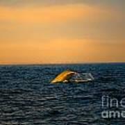 Whale Tail In The Sun Art Print