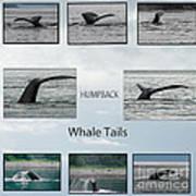 Whale Tails Art Print