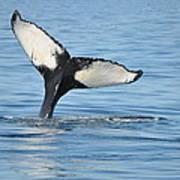 Whale's Tail Art Print