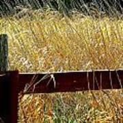 Wheat N' Fence Art Print