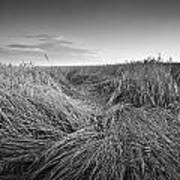 Wheat Waves Art Print