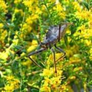 Wheel Bug  Art Print