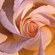 Wheel Rose   Art Print