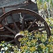 Wheels In The Garden Art Print by Glenn McCarthy Art and Photography