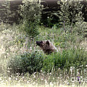 When Bears Dream Art Print