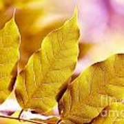 When The Leaves Turn Gold Art Print by Artist and Photographer Laura Wrede