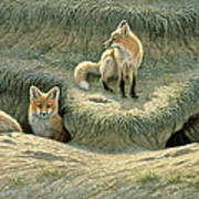 Where's Mom-fox Pups Art Print by Paul Krapf
