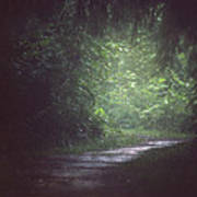 Wherever The Path May Lead Art Print
