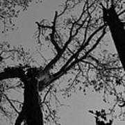 Silhouette Trees Art Print