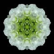 White And Green Begonia Flower Mandala Art Print
