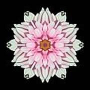 White And Pink Dahlia I Flower Mandala Art Print