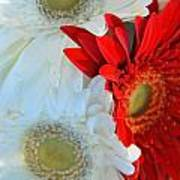 White And Red Flowers Art Print