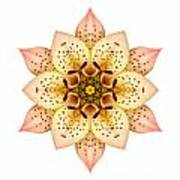 Asiatic Lily II Flower Mandala White Art Print