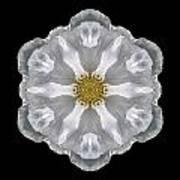 White Beach Rose IIi Flower Mandala Art Print