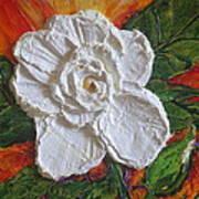 White Begonia Art Print