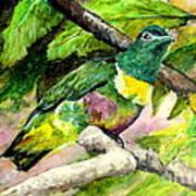White-bibbed Fruit Dove  Art Print