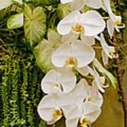 White Blooming Trail Art Print