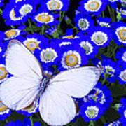 White Butterfly In Blue Flowers Art Print