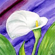 White Calla Lily Purple Mood Art Print