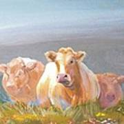 White Cows Painting Art Print