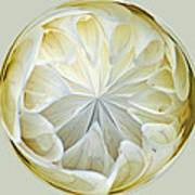 White Dahlia Orb Art Print