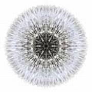 Dandelion Head I Flower Mandala White Art Print