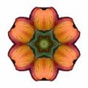 Daylily I Flower Mandala White Art Print