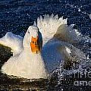 White Duck 1 Art Print