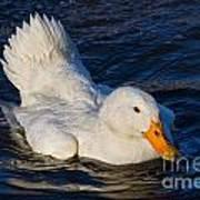 White Duck 2 Art Print