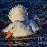 White Duck 3 Art Print