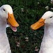 White Ducks Quacking Art Print